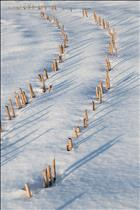 __GkfSNt8Q_00045_Winter_Corn_Stalks.jpg