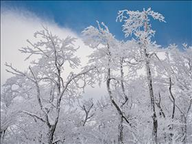 __PWTTbl13_00045_Hoar_Frost_on_Trees.jpg