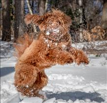__lVi8BicG_00045_Penny_Loves_Catching_Snowballs.jpg